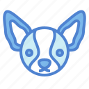 chihuahua, dog, pet, animals, breeds