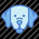 labrador, retriever, dog, pet, animals, breeds
