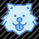 samoyed, dog, pet, animals, breeds