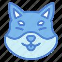 shiba, dog, pet, animals, breeds