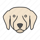 breed, dog, doggy, labrador, pet, puppy, retriever icon