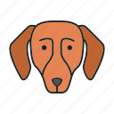 animal, breed, dachshund, dog, hound, pet, puppy icon