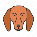 animal, beagle, breed, dog, hound, pet, puppy icon