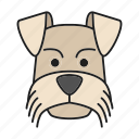 breed, dog, mini, pet, puppy, schnauzer, zwergschnauzer icon