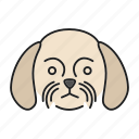 breed, chrysanthemum, dog, pet, puppy, shih, tzu icon