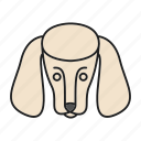 animal, breed, dog, doggy, pet, poodle, puppy icon