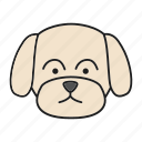 animal, breed, dog, maltese, pet, puppy, toy icon
