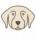 animal, breed, dog, golden, pet, puppy, retriever icon