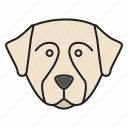 berner, bernese, breed, dog, pet, puppy, sennenhund icon