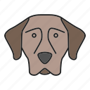 breed, dog, german, pet, pointer, puppy, shorthaired icon