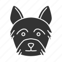 breed, dog, pet, puppy, terrier, yorkie, yorkshire icon
