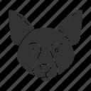 border, breed, collie, dog, pet, scottish, sheepdog