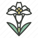 easter, easter flower, flower, honesty, lily, plants, purity icon