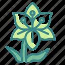 blossom, botanical, flower, garden, lily, nature, petals