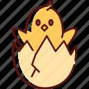 chick, egg, chick in egg, spring, easter, nature, eggs