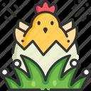 animals, bird, chick, chicken, farm