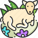 animal, goat, mammal, sheep