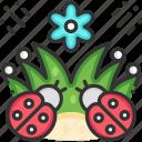 bug, insect, ladybird, ladybug