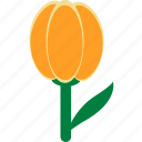 easter, flower, tulip icon