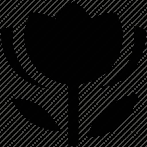 beauty, blossom, flower, stem, tulip, tulip flower icon