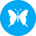 beauty, butterfly, colorful, easter, insect, nature icon