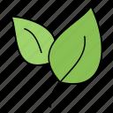 ecology, leaf, nature