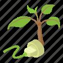 branch, ecology, isometric, leaf, logo, object, tree