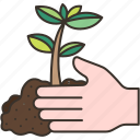 grow, plant, seedling, agriculture, nature
