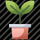 flowerpot, garden, leaf, nature, plant, seeding, sprout