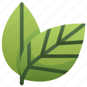 eco, ecology, leaf, leaves, nature, two