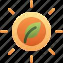 leaf, light, photosynthesis, plant, solar, sun