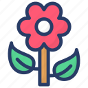 asteraceae, asterales, blossom, chamomile, daisy flower icon
