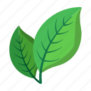 cartoon, leaf, natural, nobody, ripe, tree, two