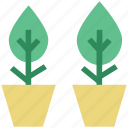 plants, greenery, growth, gardening, plant pots