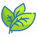 ecology, environment, leaf, nature, plant