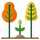 ecology, forest, grow, plant, tree