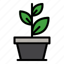plant, growth, ecology, green, nature