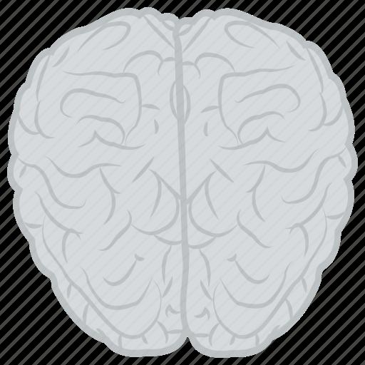 brain, head, human brain, human mind, mind icon