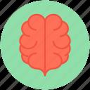 human brain, brain, body part, body organ, human organ