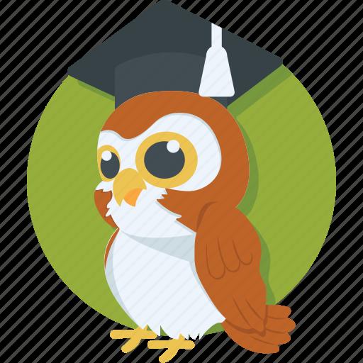 graduation, learning, owl, study, wisdom icon