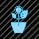 bonsai, leafs, nature, plant