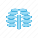 healthcare, ribcage, ribs icon