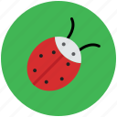 beetle, bug, cockroach, firebug, flying bug, insect, insect coor, ladybird icon