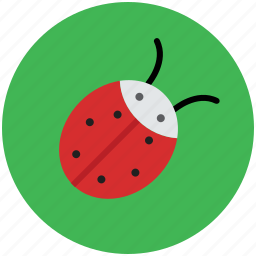 beetle, bug, cockroach, firebug, flying bug, insect, insect coor, ladybird icon