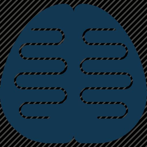 body organ, body part, brain, human brain, human organ, mind icon