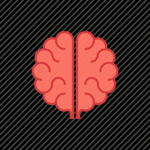 anatomy, brain, brainstorm, education, idea, intelligence, mind icon