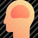 brain, head, human, organ