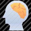 brain, human, idea