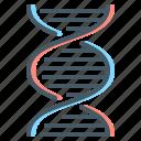 biochemistry, dna, gene, genetics, genome, medical