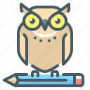 education, knowledge, learning, owl, pencil
